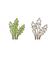 branch and stem fresh arugula in colorful vector image
