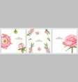 floral background with pink rose ranunculus vector image