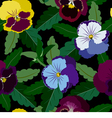 Seamless background from pansy flowers and leaves vector image vector image