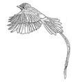 hand drawn bird vector image vector image