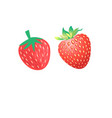 vibrant delicious strawberries vector image vector image