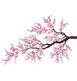 branch a blossoming cherry vector image