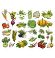 isolated set vegetables harvest for vegan market vector image