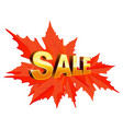 autumn sale maple leaves isolated on white vector image