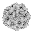 decorative verbena flower vector image vector image