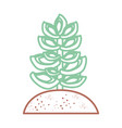 desert plant draw vector image