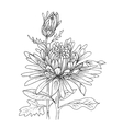 Flower hand drawn aster vector image vector image