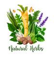 natural herbs and green organic seasonings spices vector image vector image