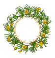rooibos branch frame vector image vector image