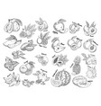 set isolated sketches exotic tropical fruit vector image