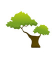 two branch isolated tree plant vector image vector image