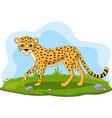 cartoon cheetah in grass vector image vector image