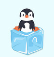 cute penguin on ice cube vector image vector image