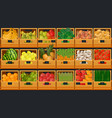 grocery store shelves with fruits and vegetables vector image
