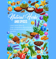 organic spices culinary herbs seasonings sketch vector image vector image