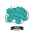 brain design mind concept white background vector image vector image