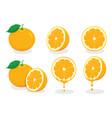 fresh orangevitamin c vector image vector image