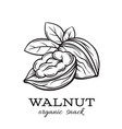 hand drawn walnut vector image