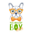 cute bulldogdog t-shirt print design cool animal vector image