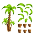 Cartoon elements the palm trees on a white vector image vector image