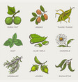 set of herbs and plants hand drawn icons vector image vector image