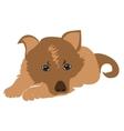 Sad puppy vector image