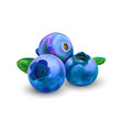 blueberry sweet fruit forest berry on a white vector image vector image