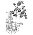 cecropia palmata vintage vector image vector image