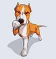 cute beige pitbull isolated on white background vector image vector image