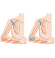 Diagram showing elbow joints vector image vector image