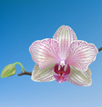 pink white orchid vector image vector image