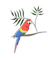 clip art tropical parrot vector image