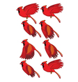 Cardinal Bird Flying Animation vector image