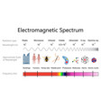 electromagnetic spectrum diagram vector image vector image
