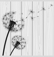 silhouette with flying dandelion buds vector image vector image