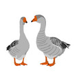 grey chinese goose couple in love isolated vector image vector image