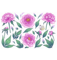 pink peony flowers buds and green leaves vector image vector image