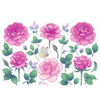 pink rose flowers buds and green leaves vector image vector image