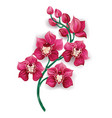 Bright Pink Orchid vector image