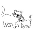 cats pet on white background vector image vector image
