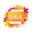 autumn sale sign with circular motif with text vector image