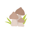 forest mushrooms wild organic product vector image vector image