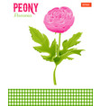 realistic peony flower with leaves vector image vector image