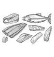 sketch icons salmon fish cut filet and steaks vector image vector image