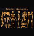 golden luxury human bones skeleton silhouette vector image vector image