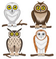 owls sitting on a branch vector image vector image