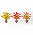 set bouquets with tulips in vase with bows vector image