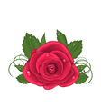 Close-up beautiful rose isolated on white vector image vector image