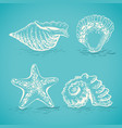 sketch drawing by hand of different seashells and vector image