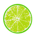 green lime fruit cut in half vector image